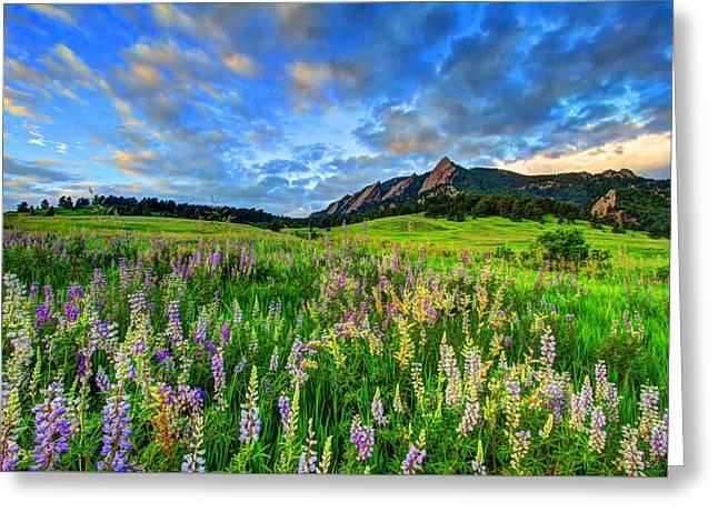 Wildflower Wonder Greeting Card by Scott Mahon