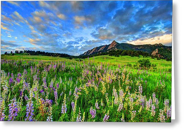 Fort Collins Photographs Greeting Cards - Wildflower Wonder Greeting Card by Scott Mahon