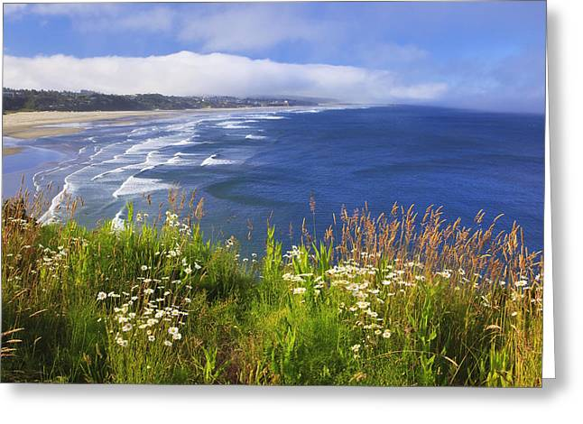 Tuttle Greeting Cards - Wildflowers Along Yaquina Head Newport Greeting Card by Craig Tuttle