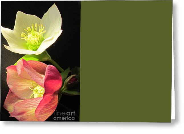Greeting Cards - Winter Rose Greeting Card by Joyce Woodhouse