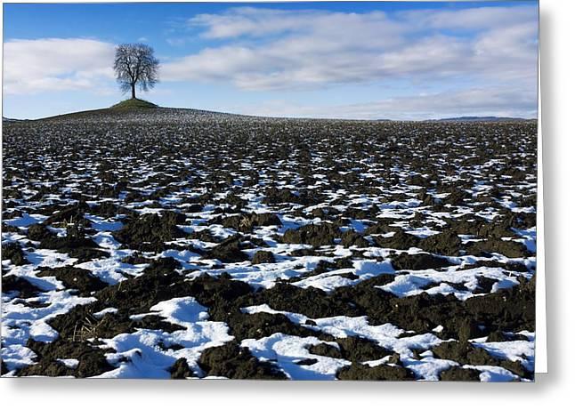 Rural Snow Scenes Greeting Cards - Winter tree. Greeting Card by Bernard Jaubert