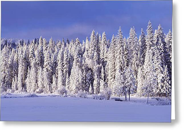 Wintry Photographs Greeting Cards - Winter Wawona Meadow Yosemite National Greeting Card by Panoramic Images