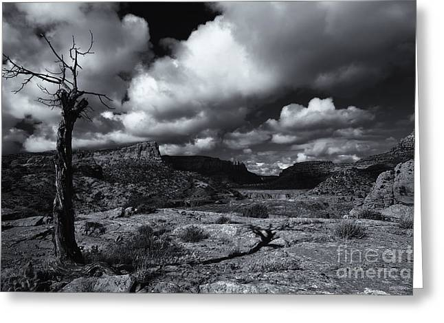 Riverbed Greeting Cards - Withered Greeting Card by Mike Dawson