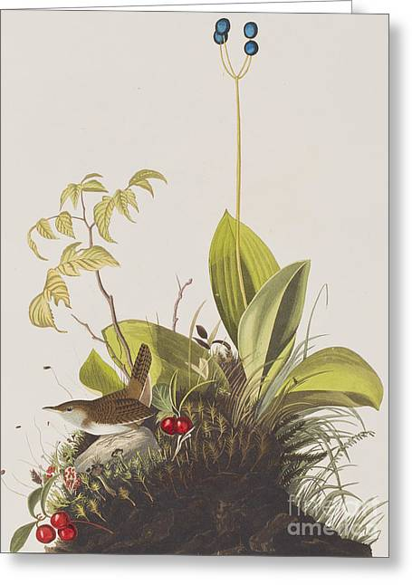 Wood Wren Greeting Card by John James Audubon