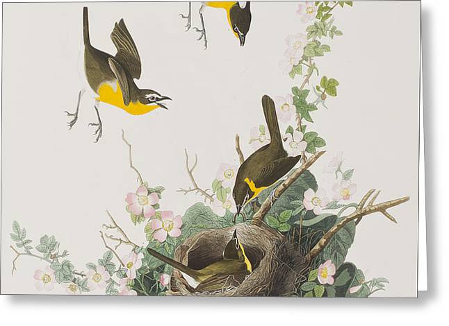 Flying Bird Drawings Greeting Cards - Yellow-breasted Chat Greeting Card by John James Audubon