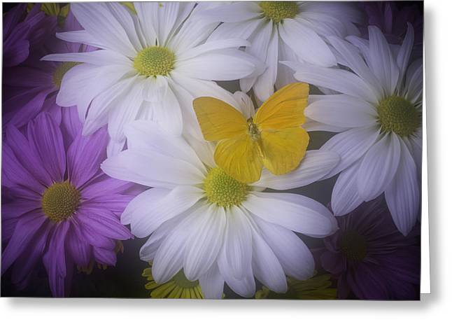 Daisy Greeting Cards - Yellow Butterfly resting Greeting Card by Garry Gay