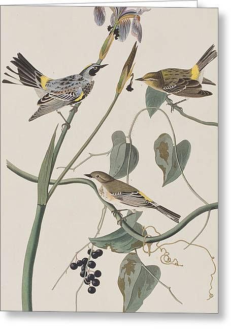 Warblers Greeting Cards - Yellow crown Warbler Greeting Card by John James Audubon