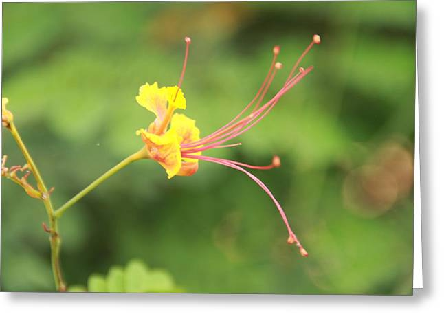 Close Focus Floral Greeting Cards - Yellow Flower Green Background Greeting Card by Pradip Patel