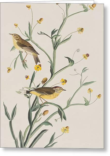 Yellow Red-poll Warbler Greeting Card by John James Audubon