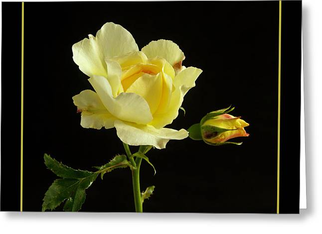 Lemon Art Greeting Cards - Yellow Rose  Greeting Card by Robert Murray