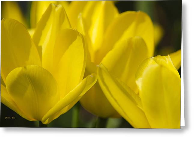 Blooms Greeting Cards - Yellow Tulip Flowers Greeting Card by Christina Rollo