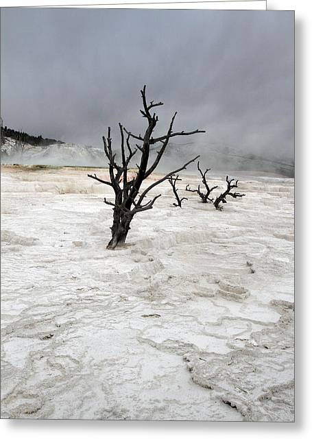 Out Of This World Greeting Cards - Yellowstone Mammoth hot springs Greeting Card by Pierre Leclerc Photography