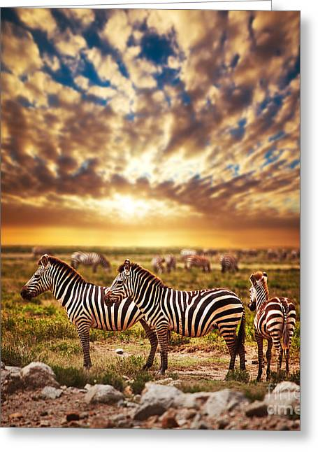 Zebras Herd On African Savanna At Sunset. Greeting Card by Michal Bednarek
