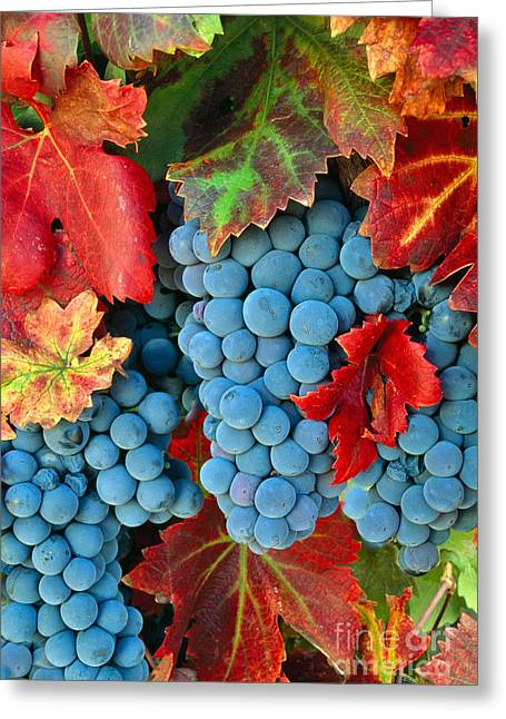 Zinfandel Greeting Cards - Zinfandel Grapes Greeting Card by Inga Spence