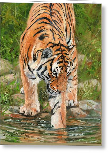 Amur Tiger Greeting Card by David Stribbling