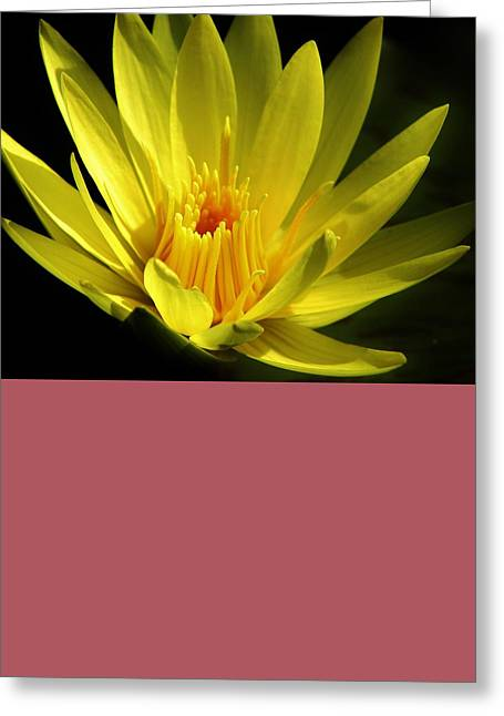 Morning Bloom Greeting Card by Bruce Bley