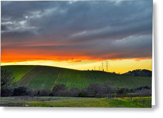 Jansson Greeting Cards - Morning in The Vineyard Greeting Card by Maria Jansson