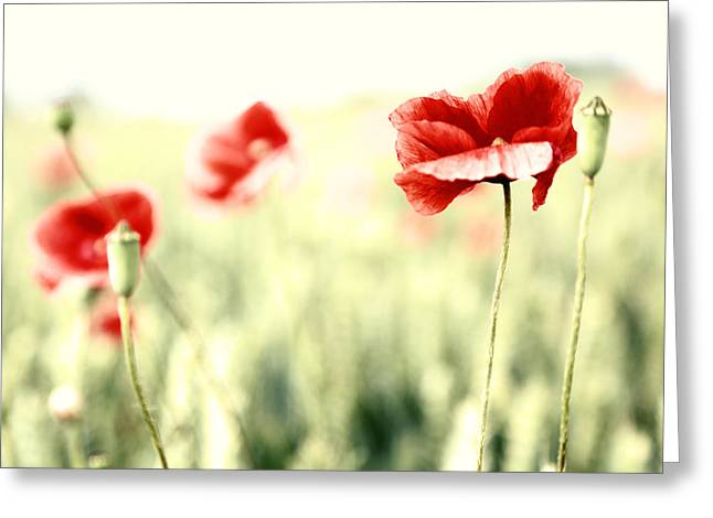 Blume Greeting Cards - Poppies Greeting Card by Falko Follert