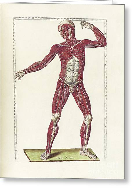 18th Century Digital Greeting Cards - The Science Of Human Anatomy Greeting Card by National Library of Medicine