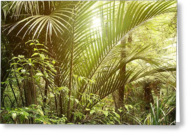 Raining Greeting Cards - Jungle Greeting Card by Les Cunliffe