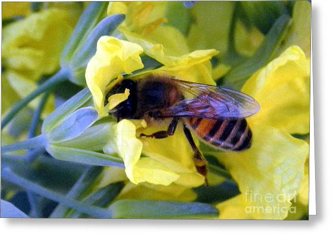 Broccoli Greeting Cards - 1086  The Bee and the Broccoli Flower Greeting Card by Darcy Haynes