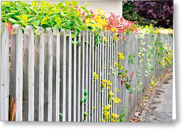 Overgrown Greeting Cards - Fence Greeting Card by Tom Gowanlock