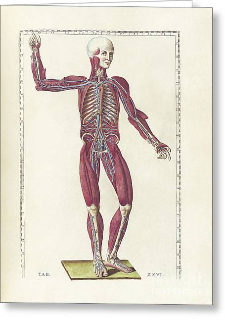 The Science Of Human Anatomy Greeting Card by National Library of Medicine