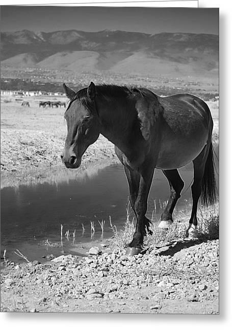Virginia Range Mustangs Greeting Card by Maria Jansson