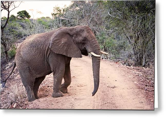1109 African Roadblock Greeting Card by Steve Sturgill