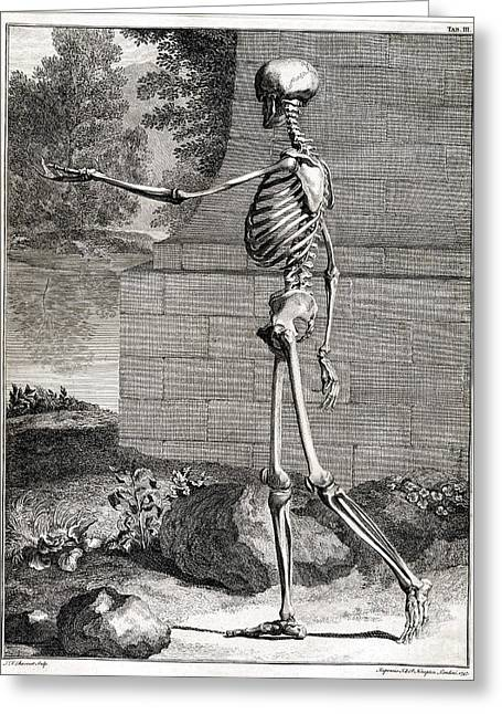 Recently Sold -  - 18th Century Greeting Cards - 18th Century Anatomical Engraving Greeting Card by Science Source
