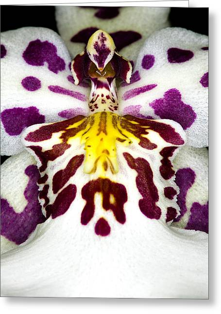 Phalus Greeting Cards - Exotic Orchid Flower Greeting Card by C Ribet