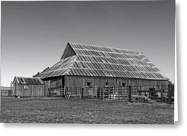 Tin Roof Greeting Cards - The Old Barn Greeting Card by Mountain Dreams