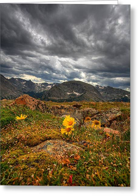Rocky Mountain National Park Prints Greeting Cards - 12000 Foot Flower Greeting Card by Peter Tellone