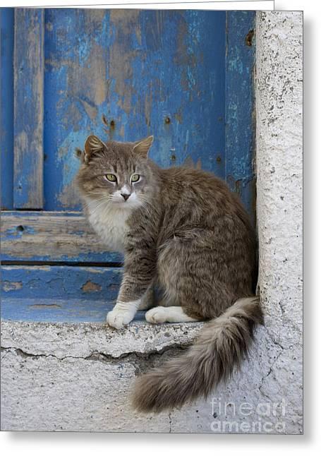 Tom Cat Greeting Cards - Cat In A Doorway, Greece Greeting Card by Jean-Louis Klein & Marie-Luce Hubert
