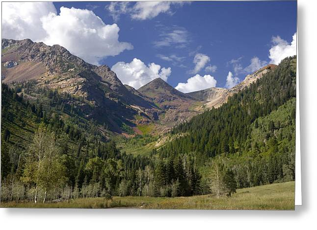 Mountain Meadow Greeting Card by Mark Smith