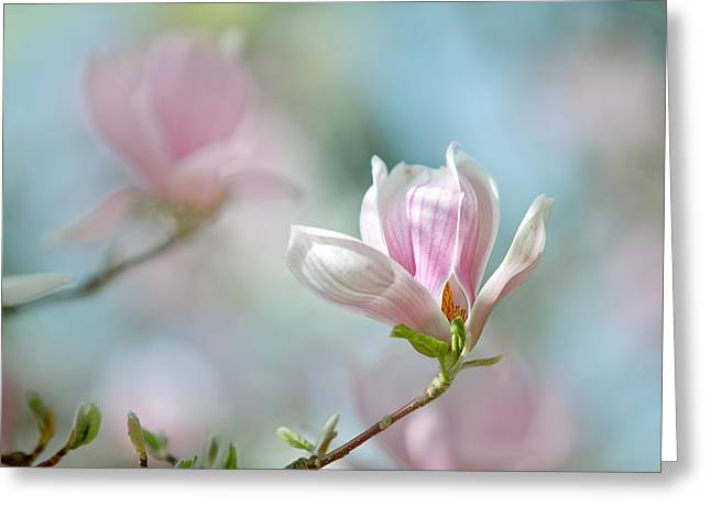 Magnolia Flowers Greeting Card by Nailia Schwarz