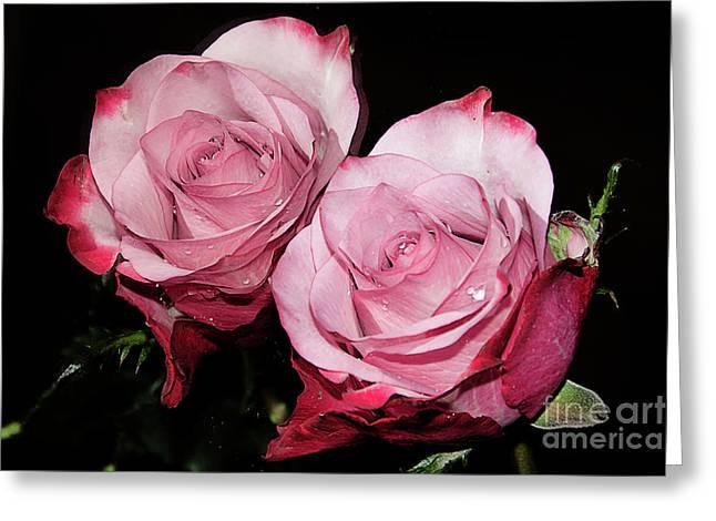 Beautiful Rose Greeting Card by Elvira Ladocki