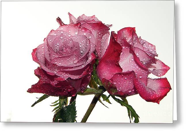 Three Roses Greeting Card by Elvira Ladocki