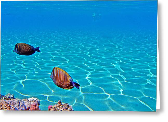 Sea Lions Greeting Cards - Underwater World. Greeting Card by Andy Za