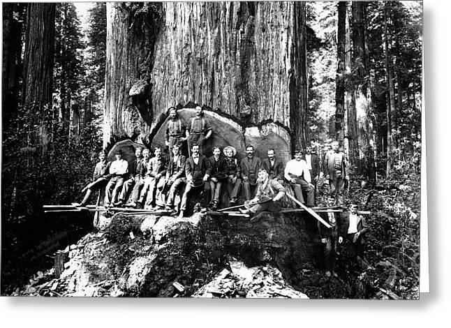 19 Lumberjacks In Redwood Undercut C. 1882 Greeting Card by Daniel Hagerman