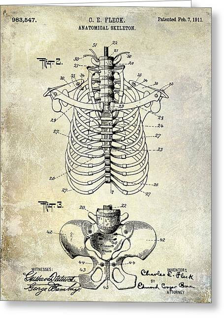 Sculling Greeting Cards - 1911 Anatomical Skeleton Patent  Greeting Card by Jon Neidert