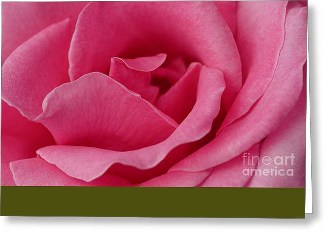 A Rose For You Greeting Card by Nick  Boren