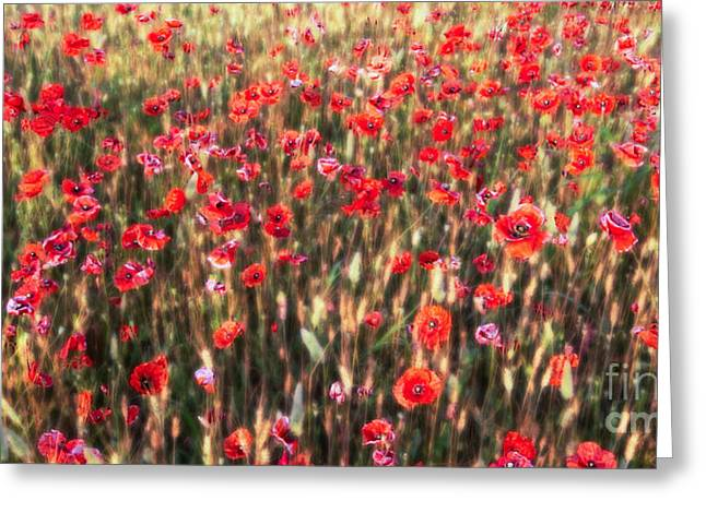Hannes Cmarits Greeting Cards - A Summer Full Of Poppies Greeting Card by Hannes Cmarits