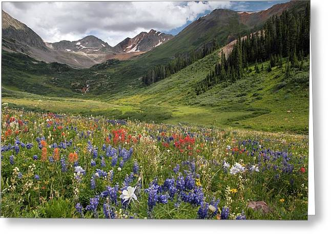 Alpine Flowers In Rustler's Gulch, Usa Greeting Card by Bob Gibbons