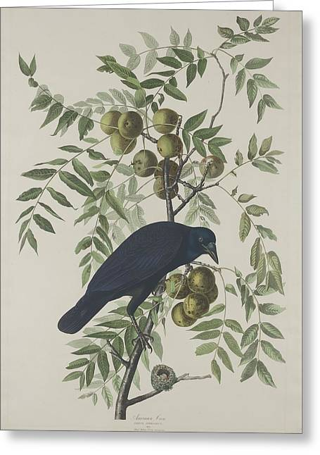 American Crow Greeting Cards - American Crow Greeting Card by John James Audubon