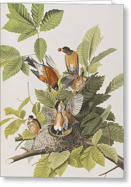 Label Greeting Cards - American Robin Greeting Card by John James Audubon
