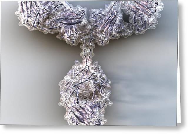 Molecules Greeting Cards - Antibody, Molecular Model Greeting Card by Phantatomix