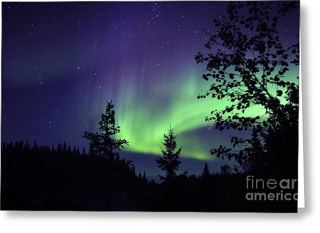 Backlit Greeting Cards - Aurora Borealis Above The Trees Greeting Card by Jiri Hermann