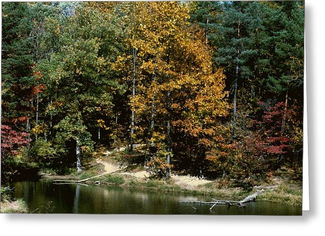 Indiana Autumn Greeting Cards - Autumn Colors Greeting Card by Gary Wonning