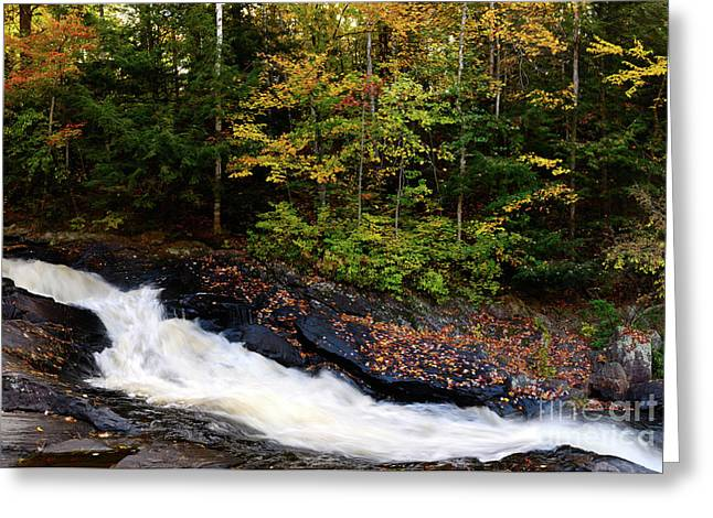 Fall River Scenes Greeting Cards - Autumn in Arrowhead Provincial Park Greeting Card by Oleksiy Maksymenko